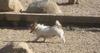 Dog_run_004_2