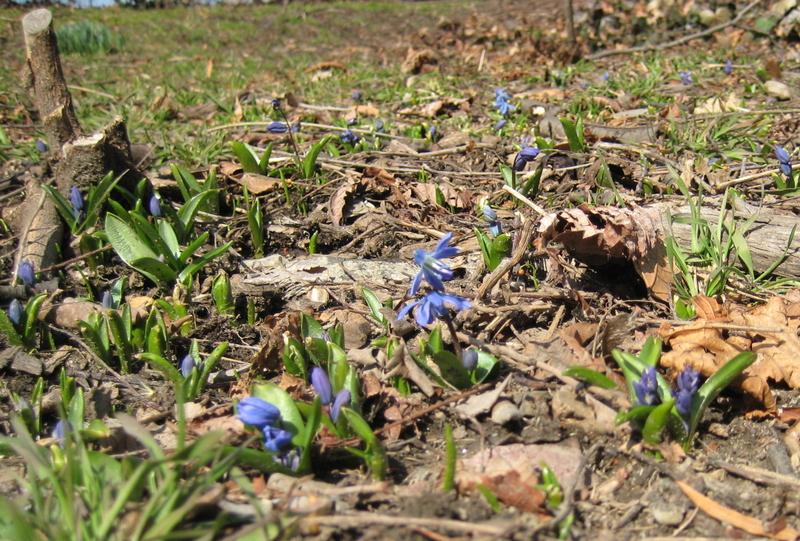 Spring_003_2