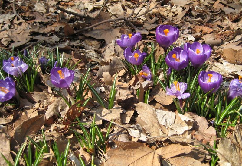 Spring_006_2
